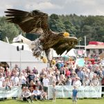 Ben Potter's Eagle at Country Pursuits at Yorkshire Show