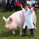 Young Pig Handler Champion at the Yorkshire Show